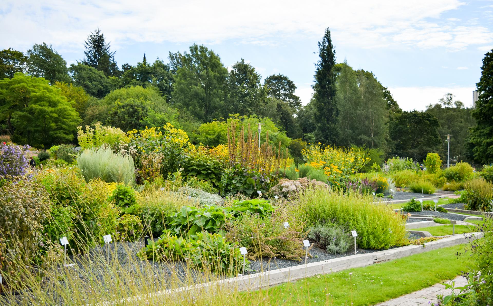 """Все растения в Ботаническом саду Хельсинки имеют """"именные"""" таблички."""