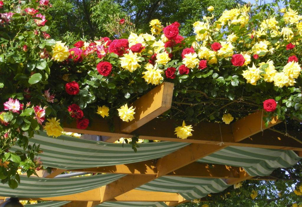 цветы в саду Duni Marina Royal Palace