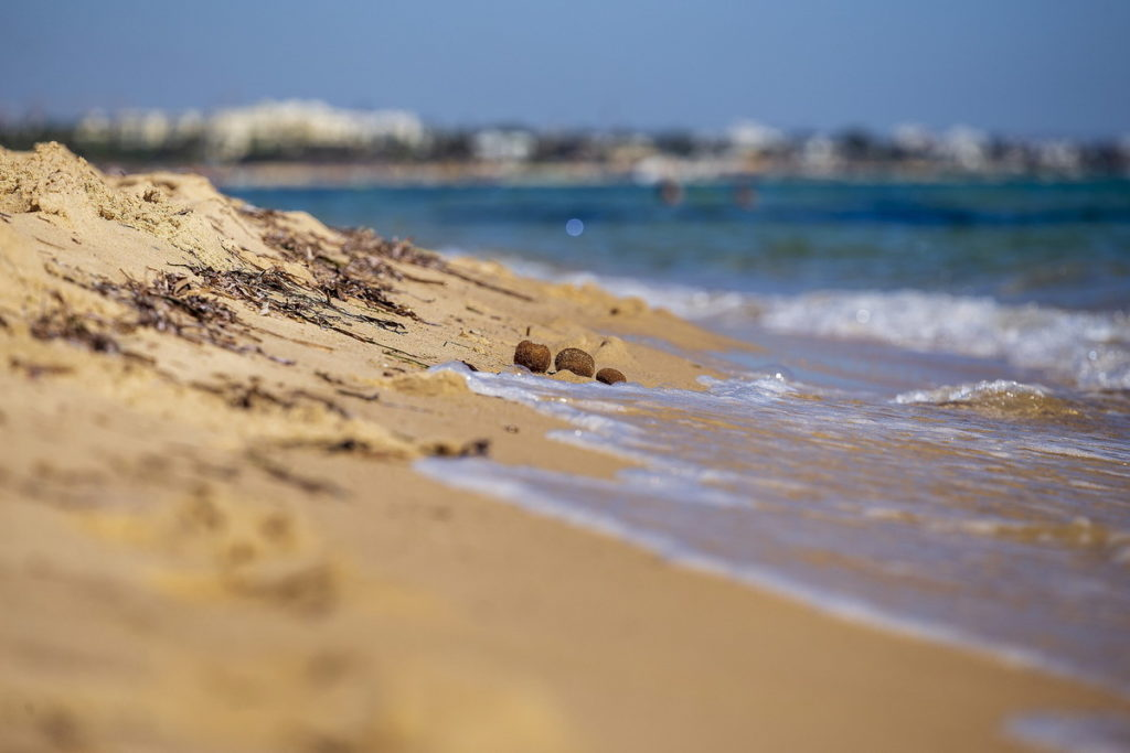 море тунис