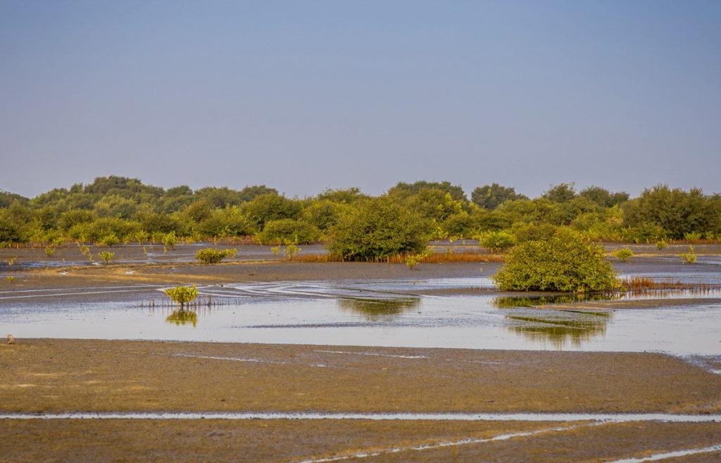 умм аль кувейн мангровые леса