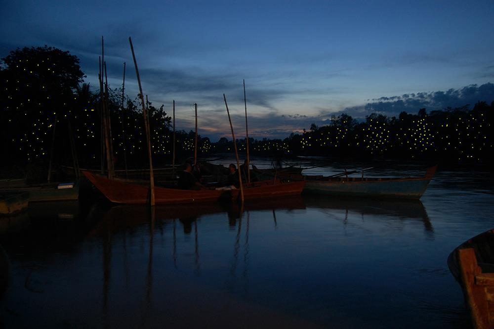 Парк светлячков
