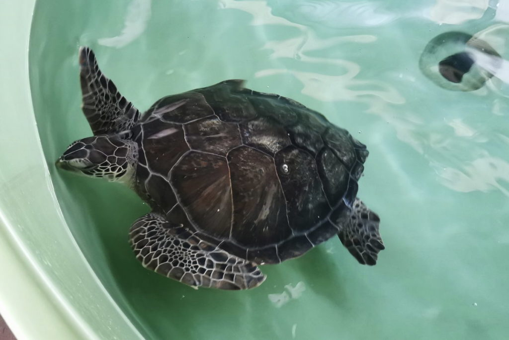 Sea Turtle Conservation Foundation