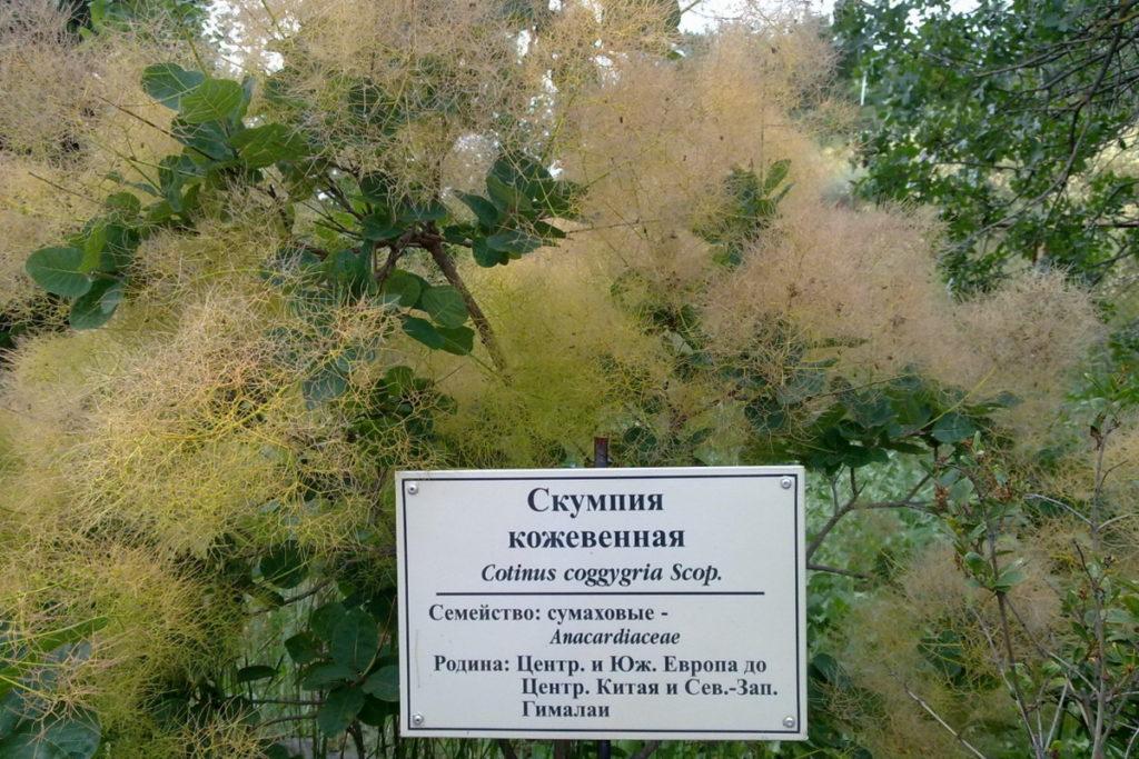 ботанический сад Музея истории и природы Карадага