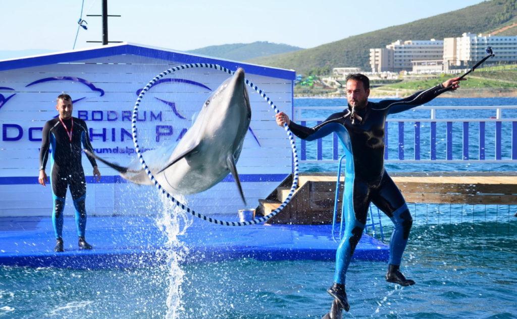 Дельфинарий в Бодруме