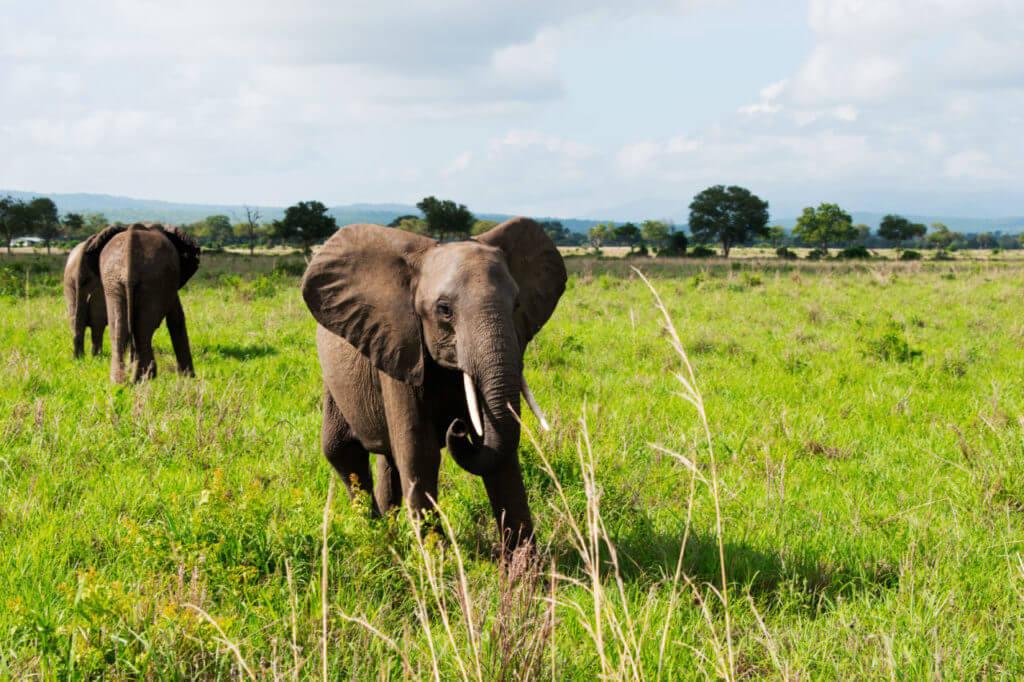Слоны в парке Микуми