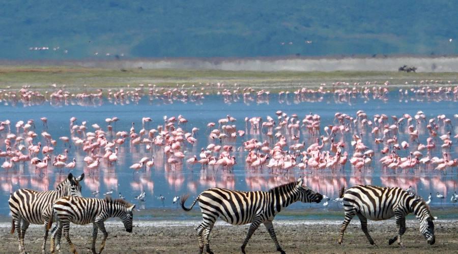 Животные в Нгоронгоро