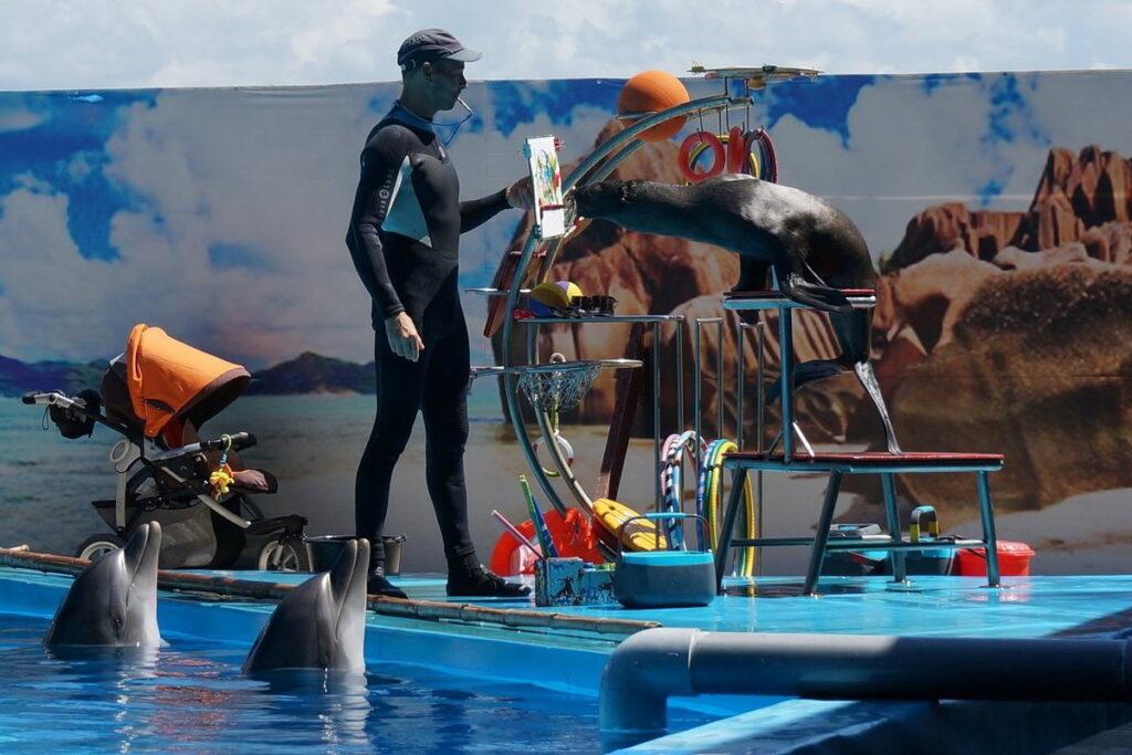Абхазский Национальный Дельфинарий