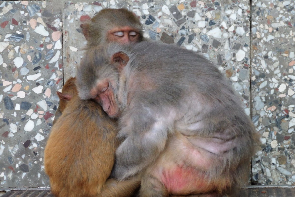 Sukhumi Monkey Nursery