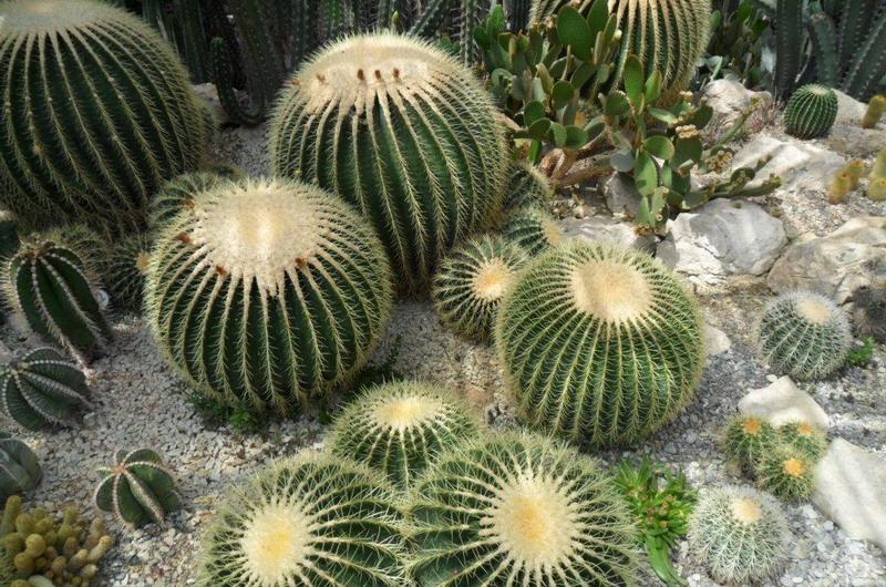 сад кактусов
